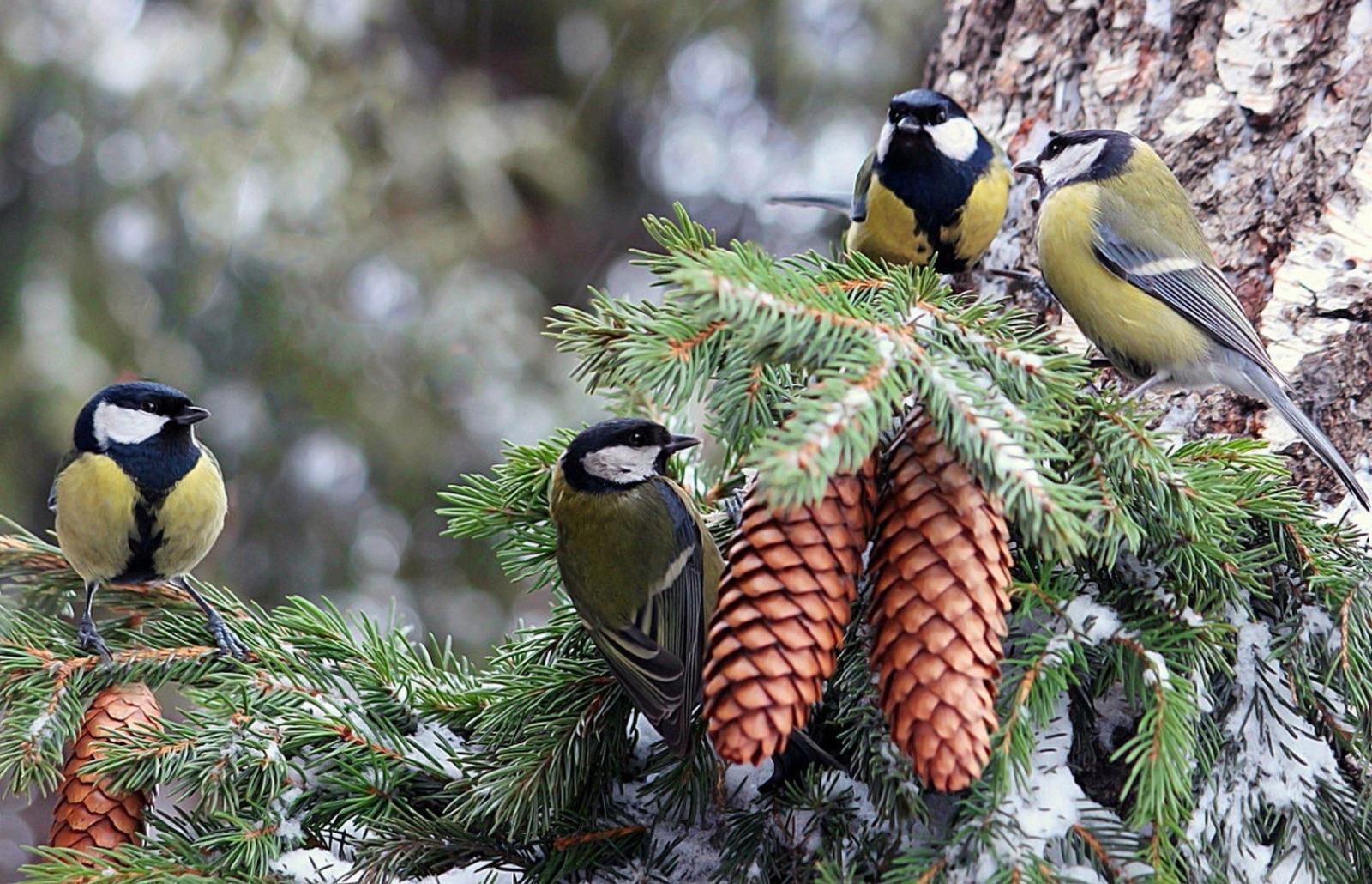В брянском лесу запечатлели на фото тайную жизнь птиц