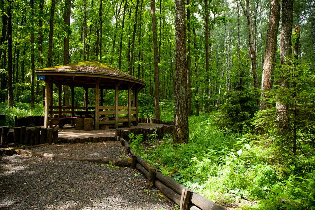 В Брянской области запретили посещать леса