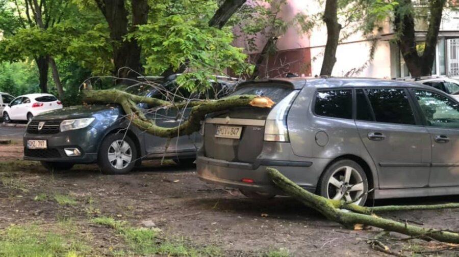 В Володарском районе Брянска аварийное дерево упало на припаркованные машины