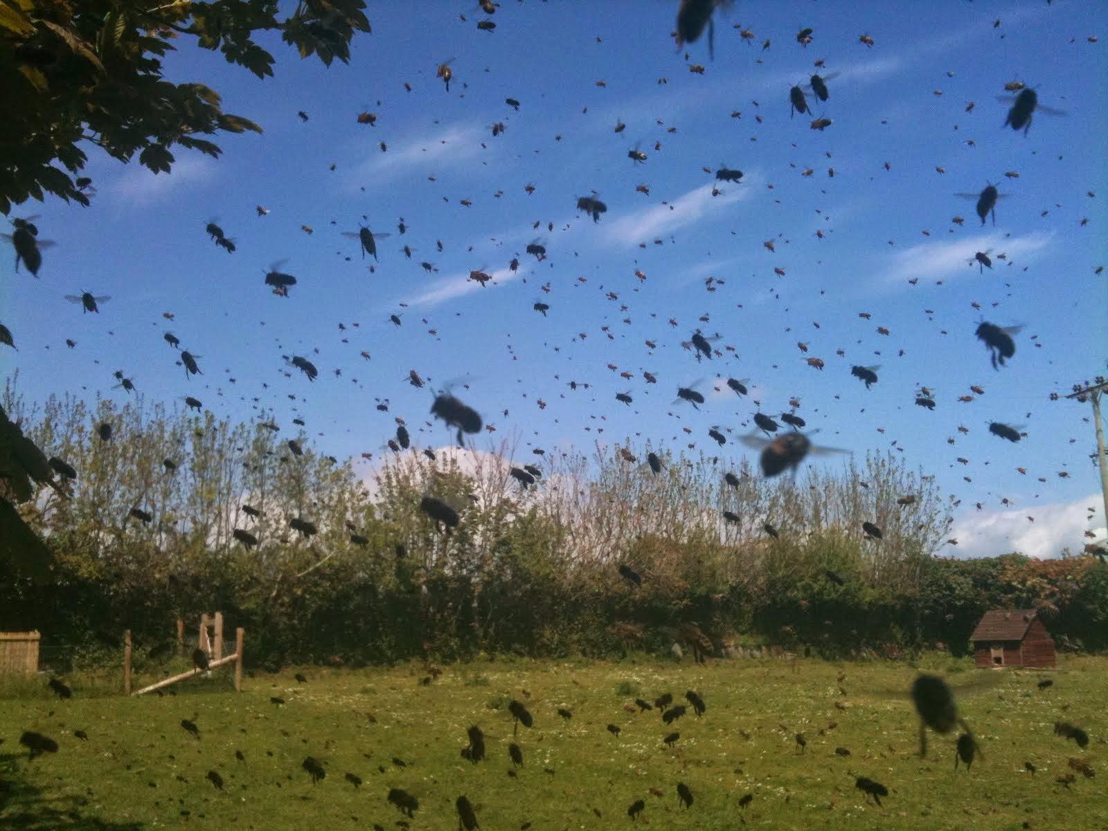 В Комаричском районе после обработки земли химикатами погибли пчелы