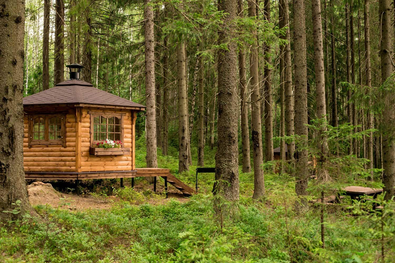 В Брянской области запретили посещение 18 лесничеств