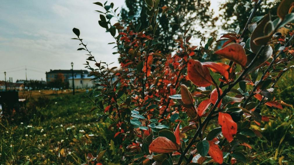 Более 200 фруктовых деревьев радуют жителей в брянском «Саду Победы»