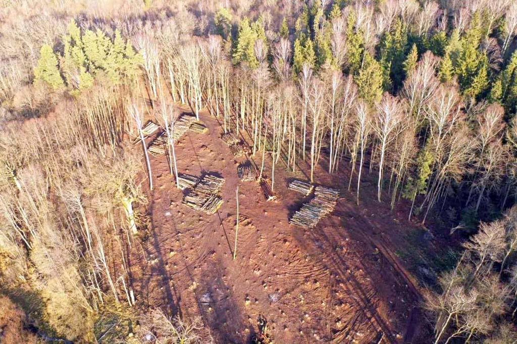 В Брянском районе обнаружили варварские вырубки леса