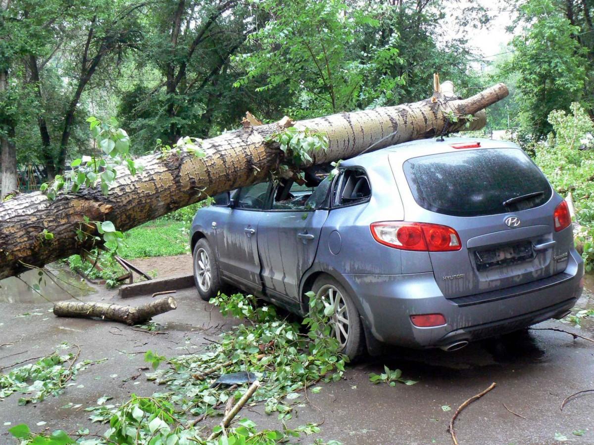 В Брянске у парка Толстого на припаркованный автомобиль рухнуло дерево