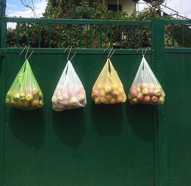 В Брянске пенсионер бесплатно угощает яблоками