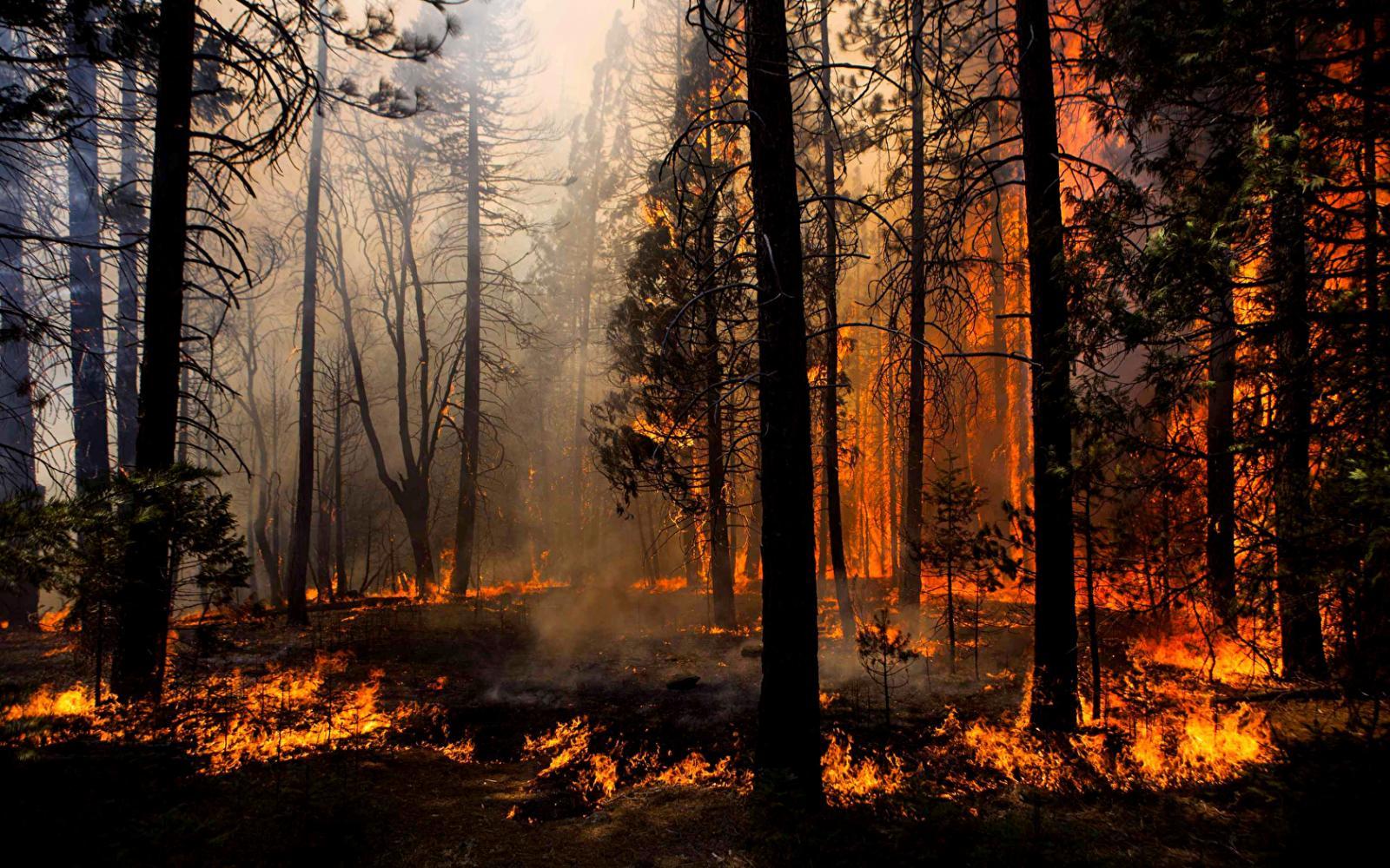 В Трубчевском районе произошел лесной пожар