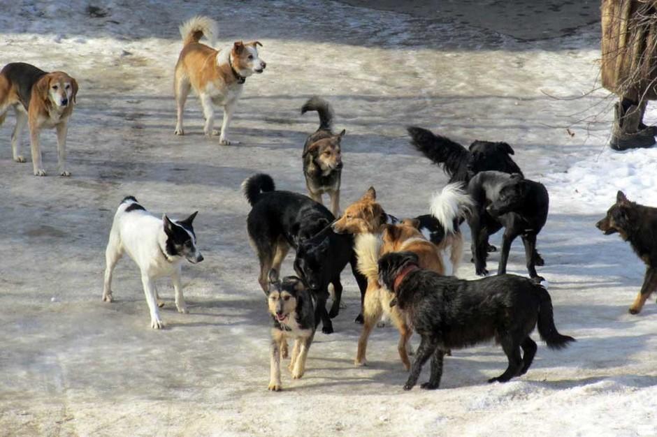 Брянцев на проспекте Ленина стали кусать собаки