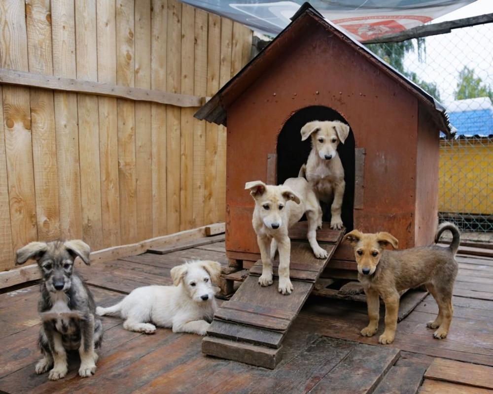 Брянцам из-за коронавируса запретили посещать приюты для животных