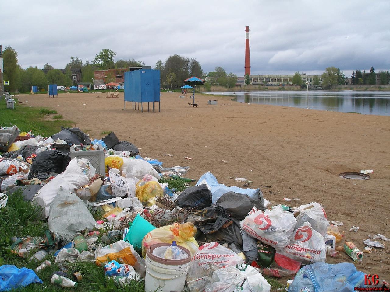 В Бежицком районе пляж на озере ДСК превратили в свинарник