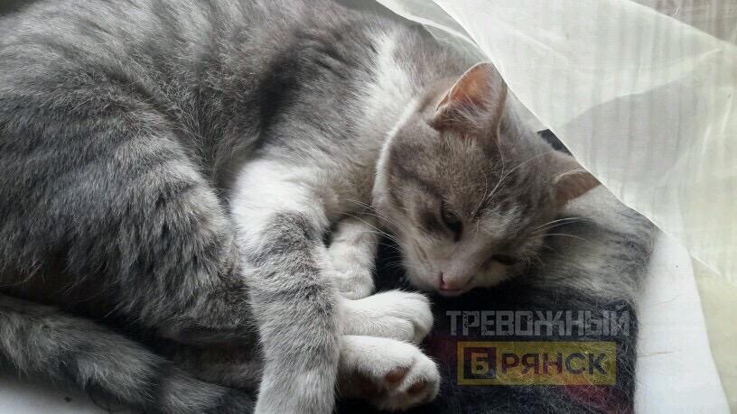 В Фокинском районе Брянска зверски убивают собак и кошек