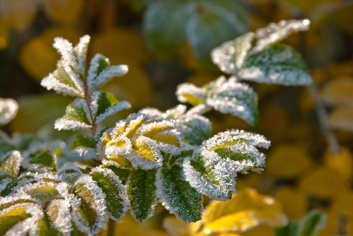 В Брянске объявлено экстренное предупреждение из-за заморозков