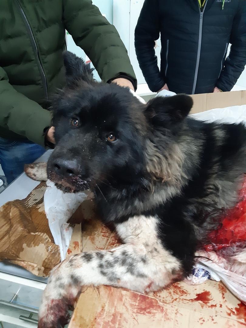Брянцы пытаются спасти сбитую на мосту собаку