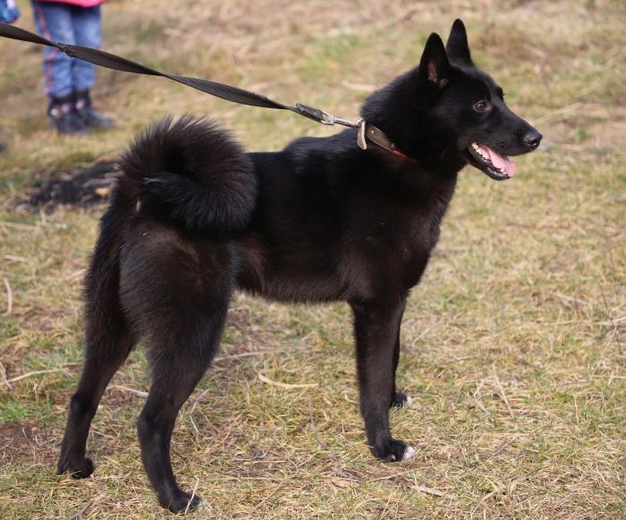 В Клинцах провели выставку охотничьих собак