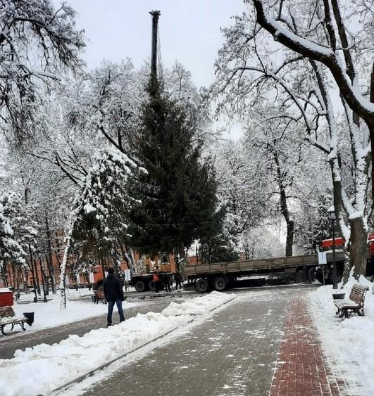 Главную новогоднюю ёлку установили в Брянске в сквере Карла Маркса