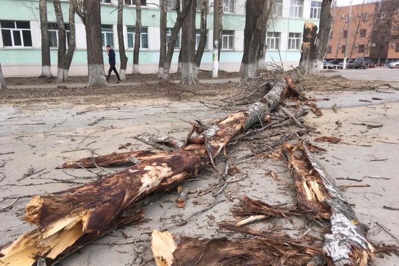 На улице Емлютина в Брянске ветка дерева рухнула на обувной магазин