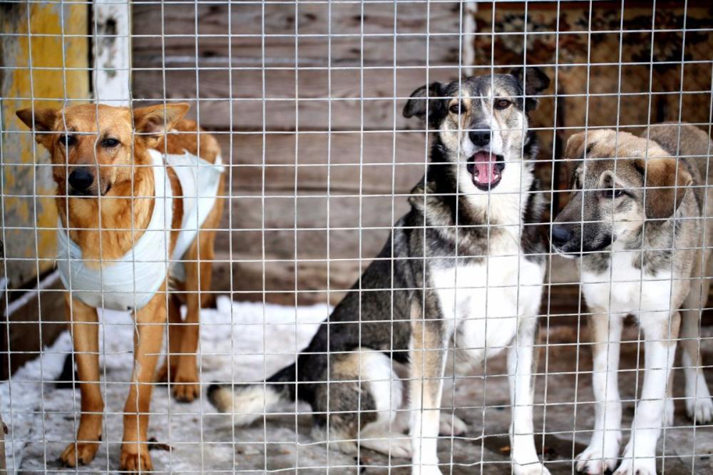 В Брянске 32 собаки из приюта на Почтовой улице нашли новый дом