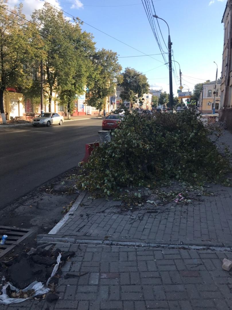 В Брянске на Калинина вырубили деревья