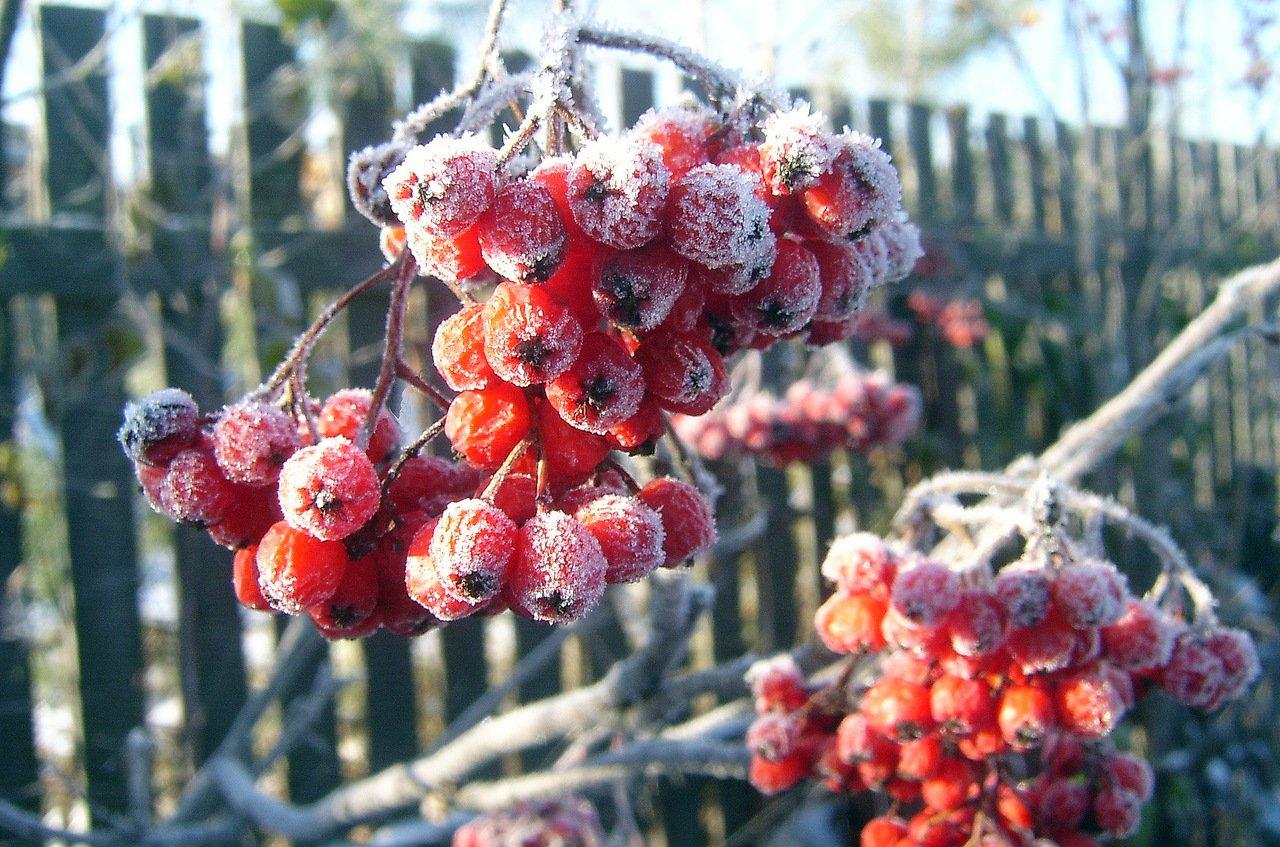 Брянцев предупредили о заморозках и гибели урожая