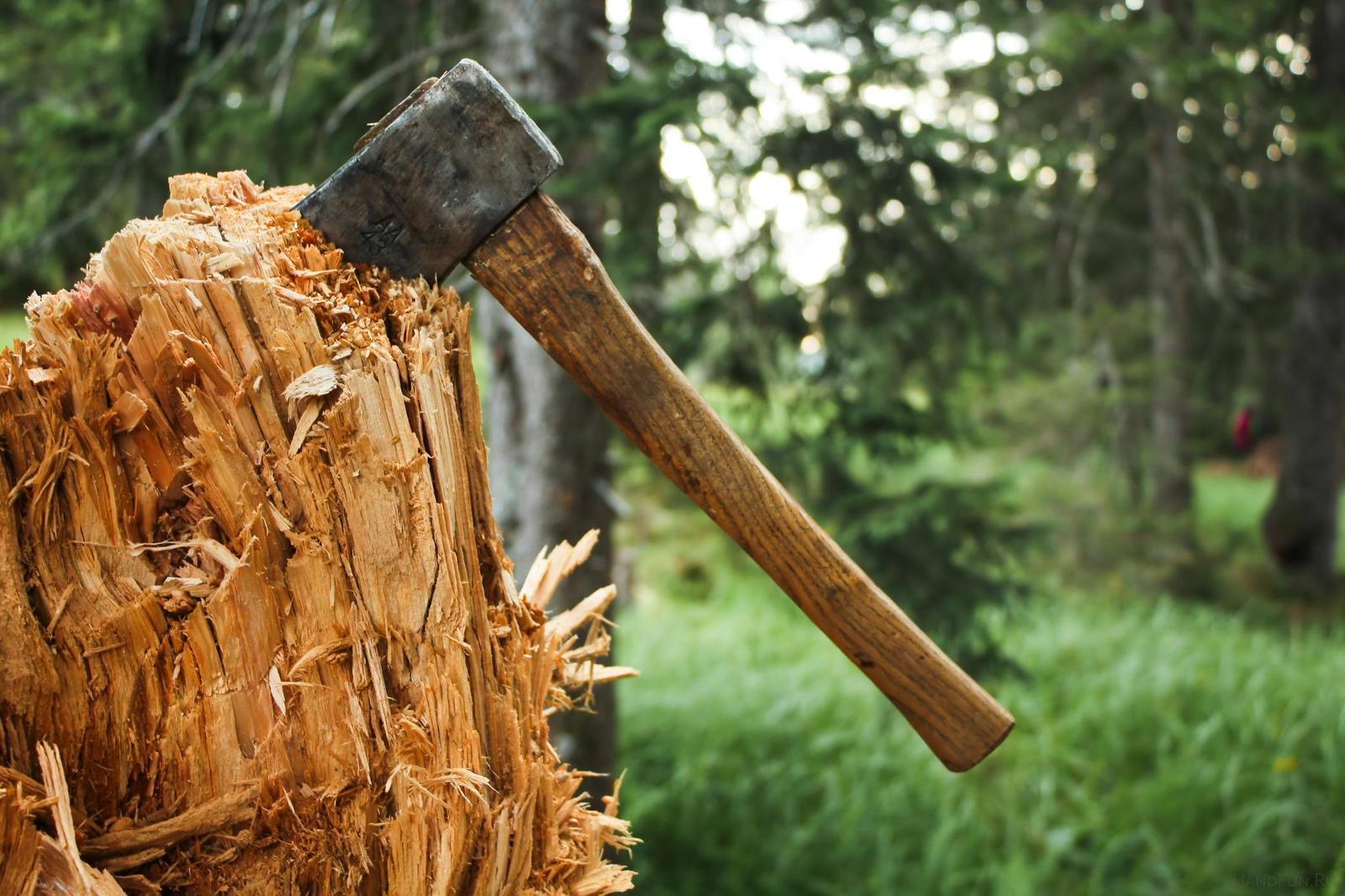 Брянского лесничего осудили за незаконную вырубку деревьев
