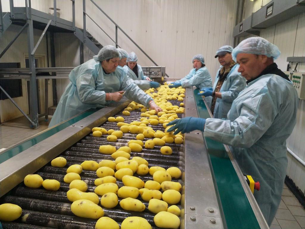 250 млн рублей инвестировали в картофельную фабрику в Погарском районе Брянской области