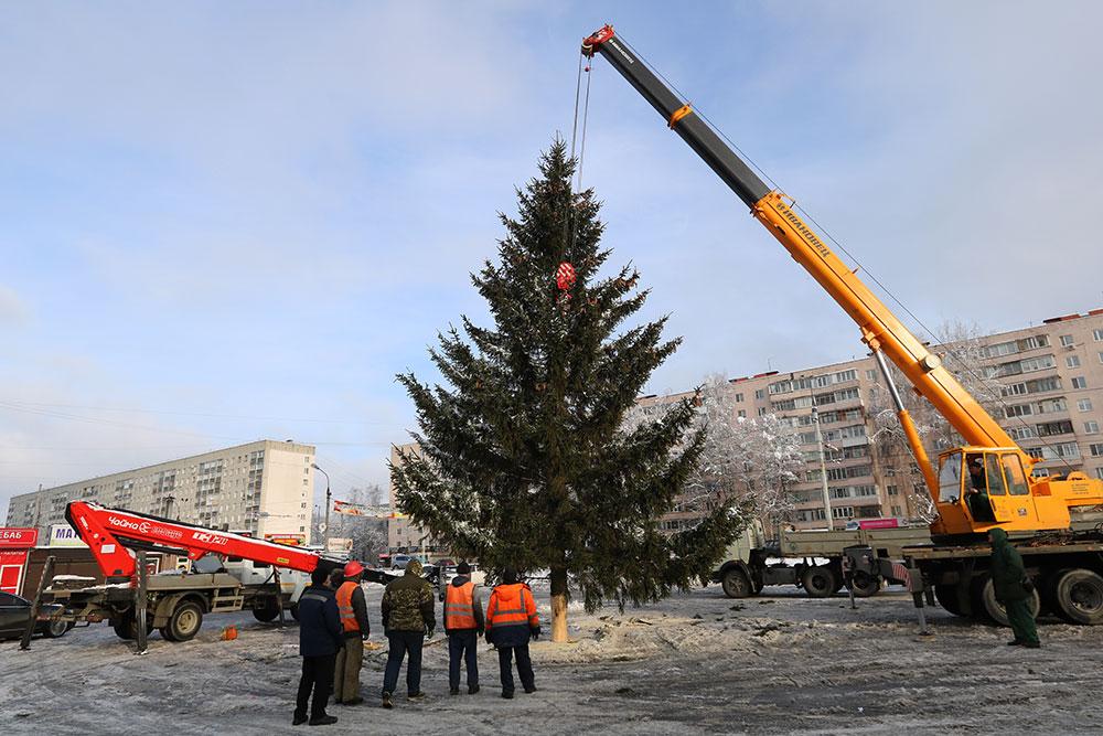 Первую живую новогоднюю ёлку установили в Брянске