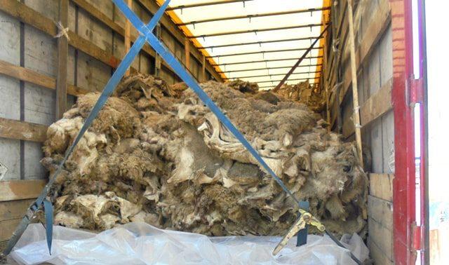 В Брянской области не прошли контроль овечьи шкуры
