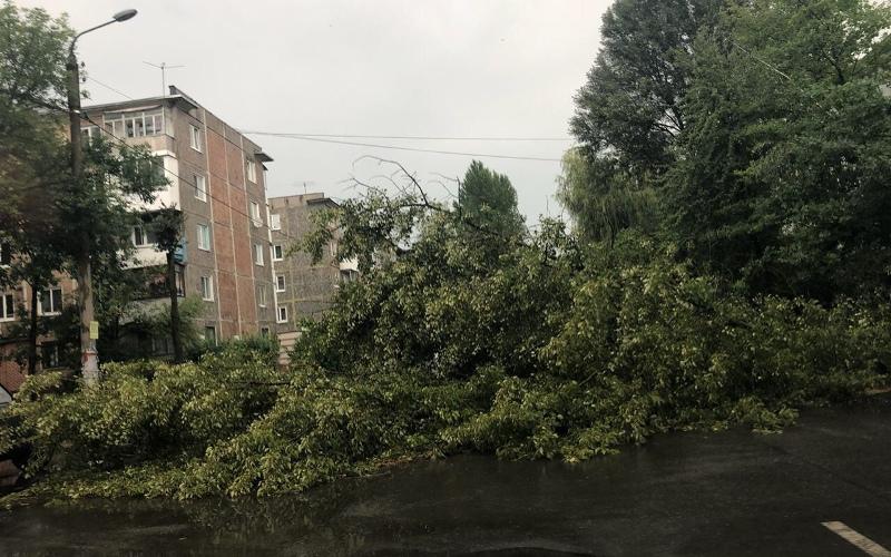В Бежице из-за грозы случился деревопад