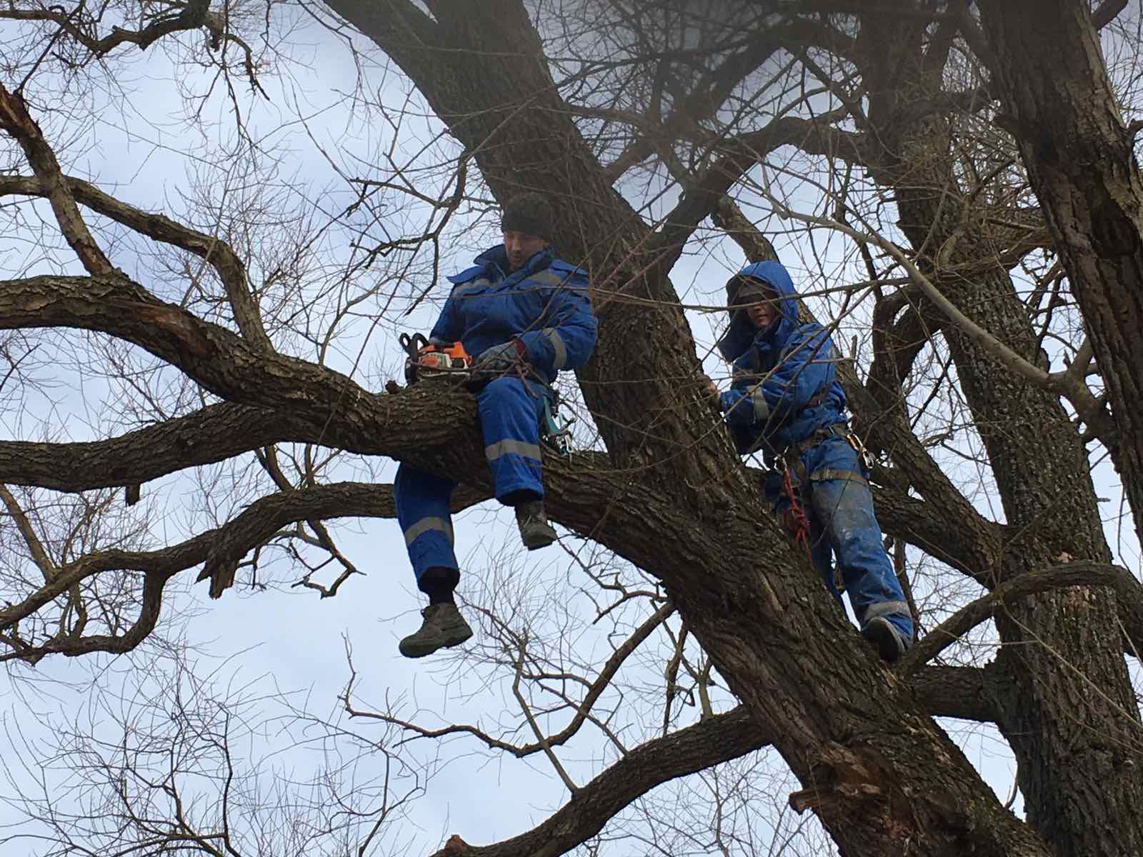 В Советском районе распилили рухнувшее в парке Толстого дерево