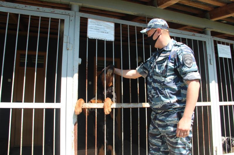В брянской полиции служат 138 собак