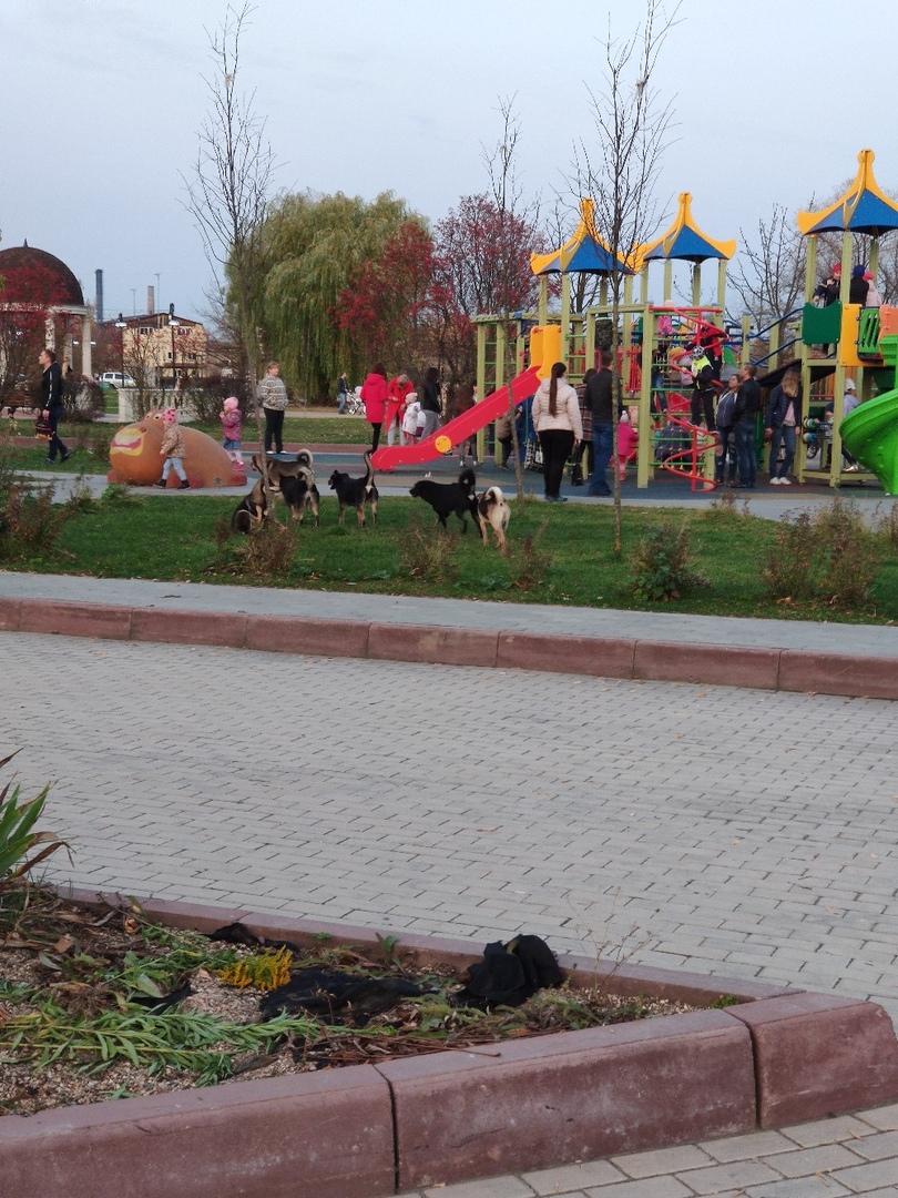 В Брянске псы терроризируют детскую площадку