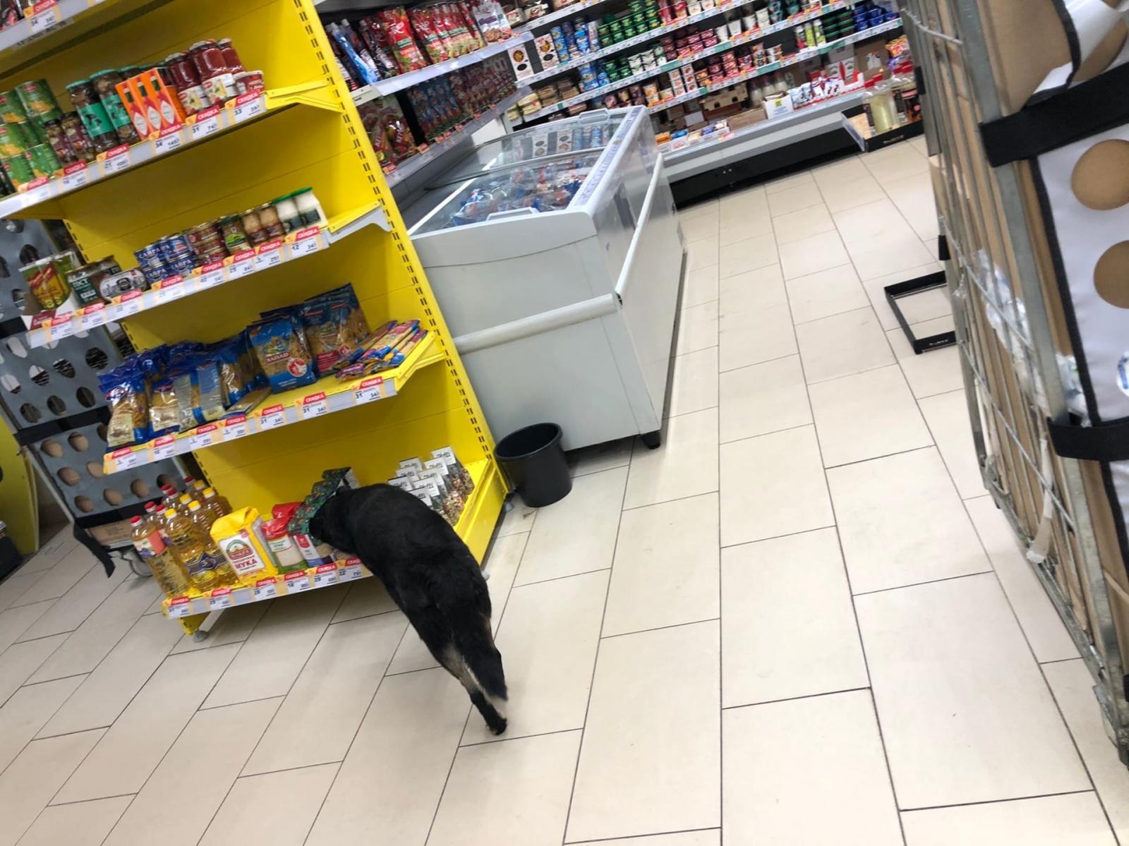 По брянскому супермаркету прогуливается дворовая собака