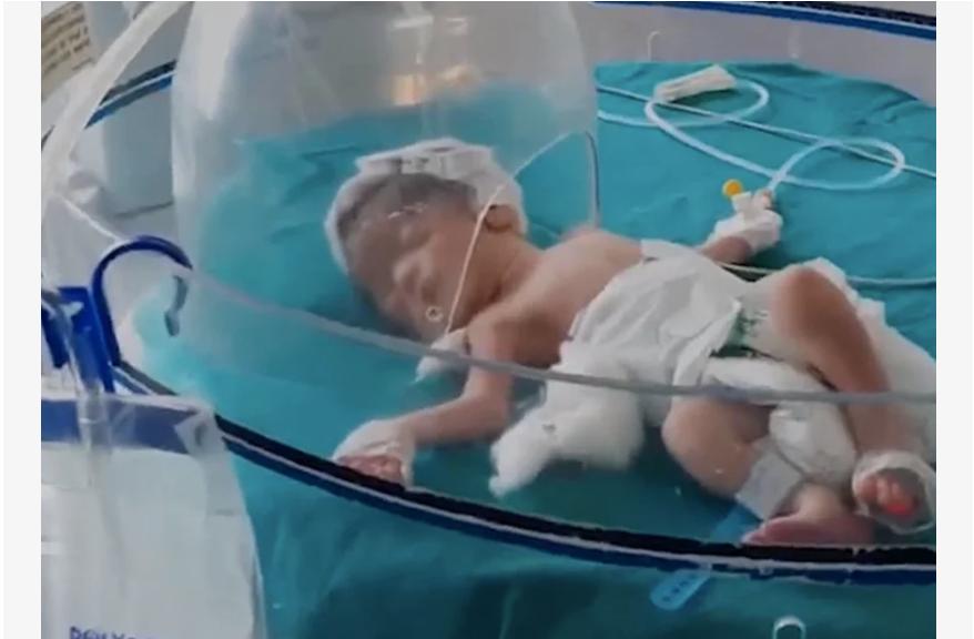 Бродячие собаки вытащили из канализации новорожденную девочку