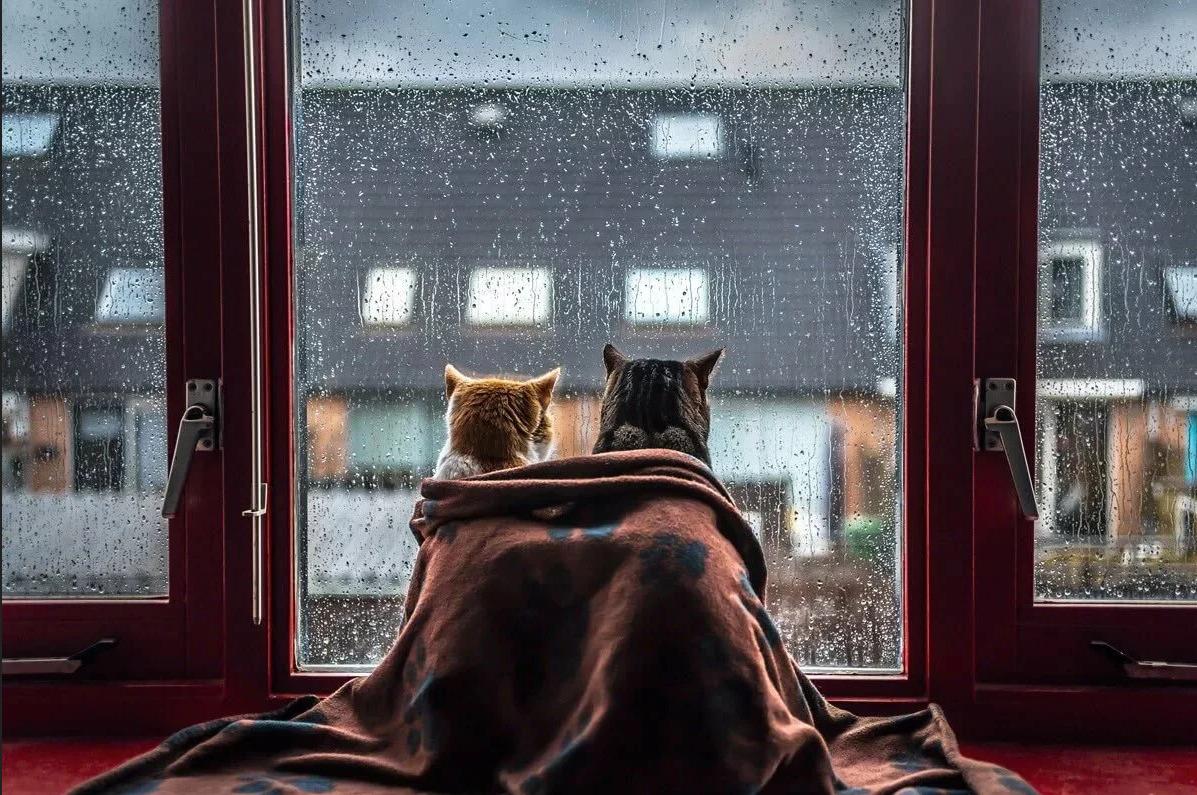 Сегодня в Брянске будет дождь с грозой
