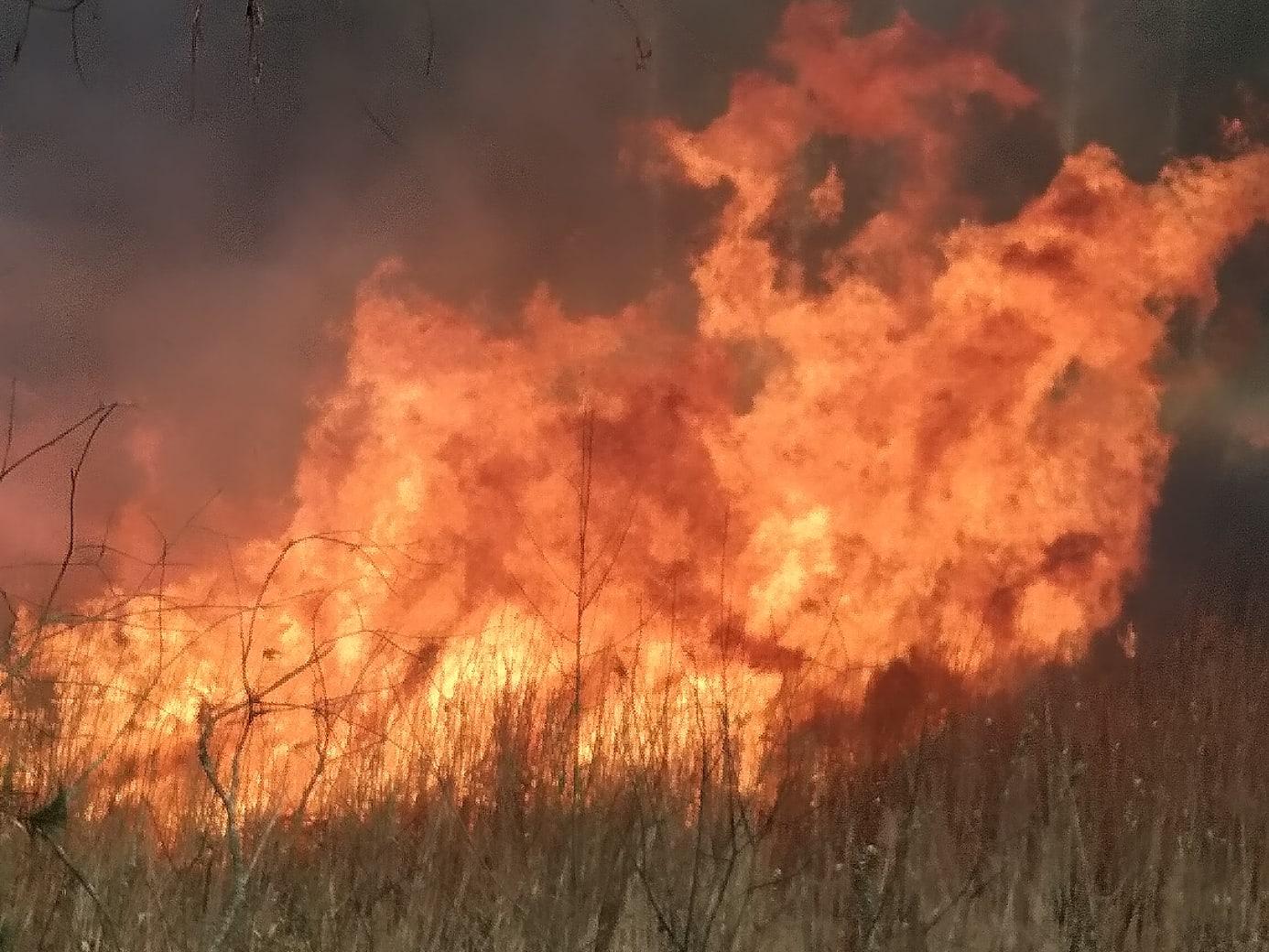 В Брянске из-за горящего камыша едва не вспыхнули дачи
