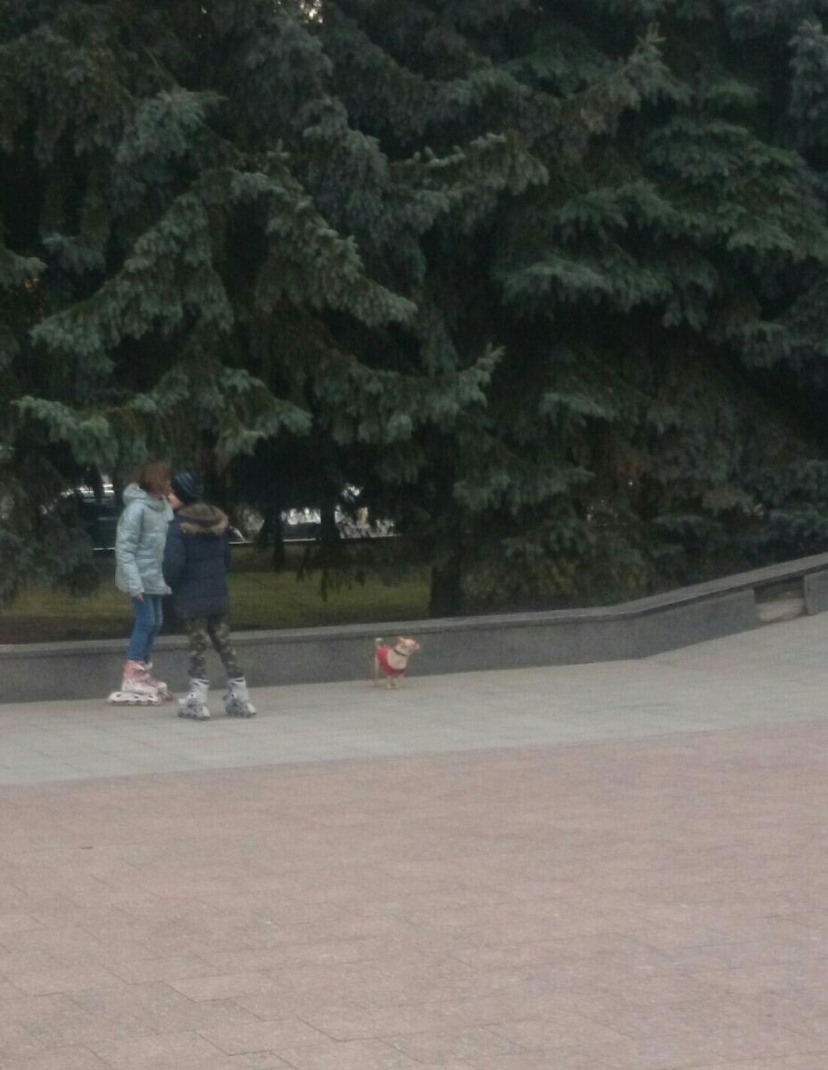 В Брянске возле цирка на женщину с ребенком напала чихуахуа
