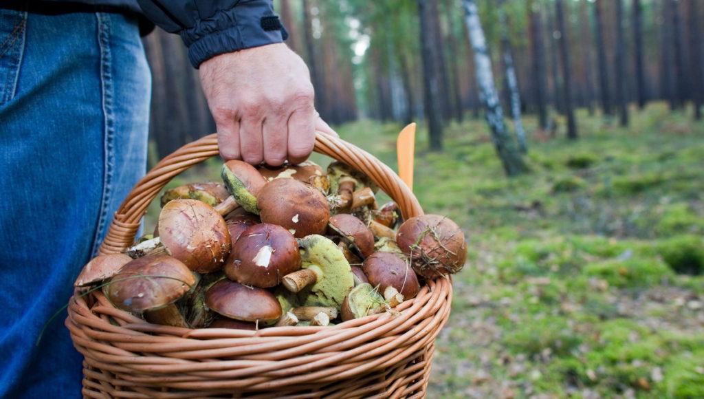 Брянским грибникам рассказали, как не потеряться и выжить в лесу