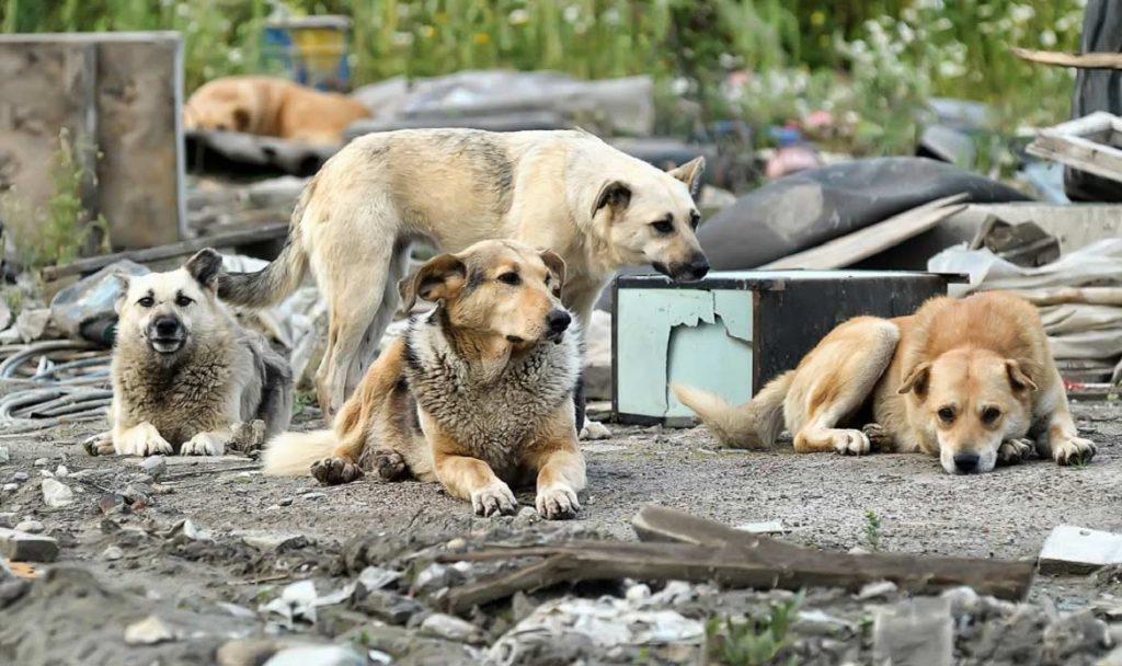 В Клинцах пассажиры поезда защищались от собак перцовым баллончиком
