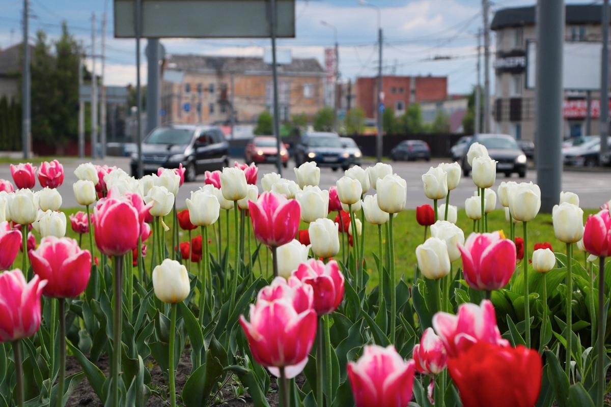 В Брянске посадят 250 тысяч цветов