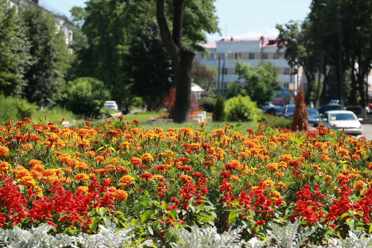 В Брянске продолжается летнее благоустройство