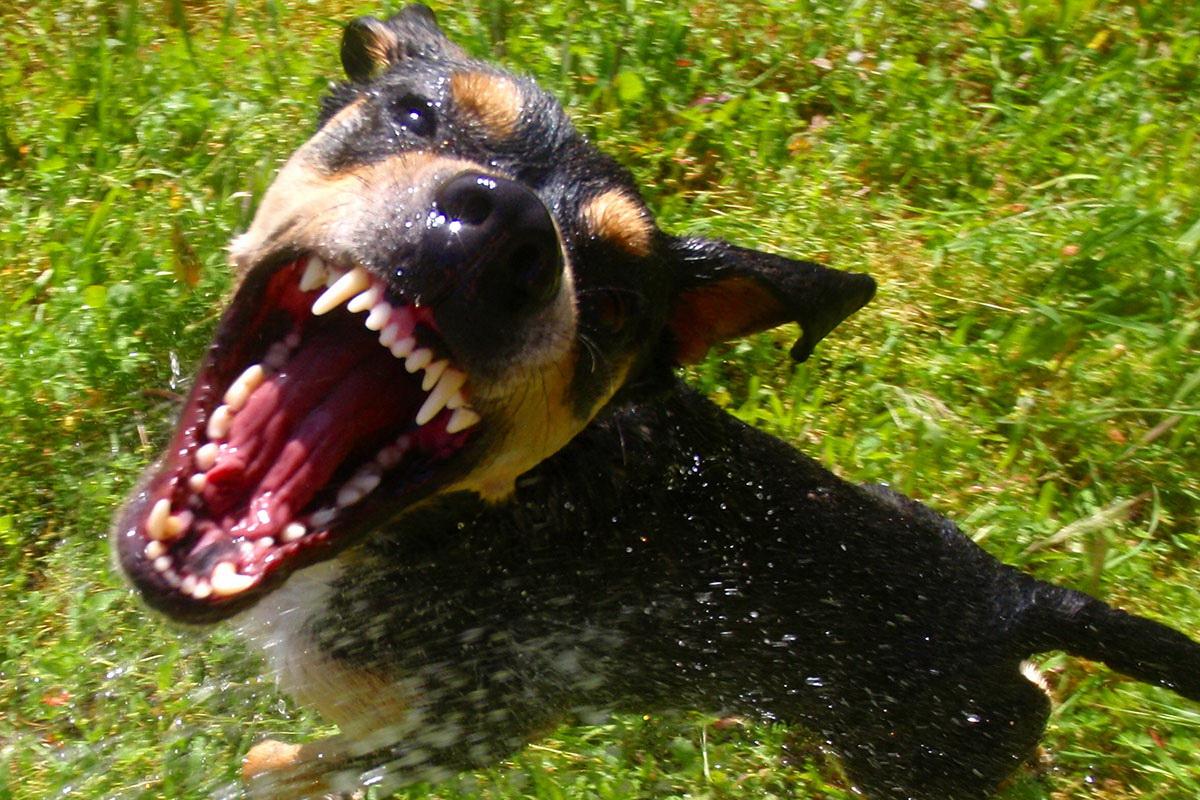 Агрессивные псы держат в страхе жителей Суземки