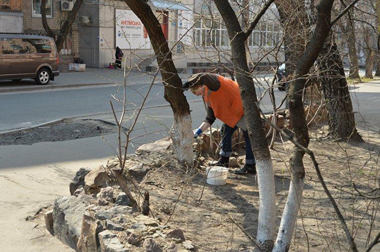 В Брянске начали белить деревья