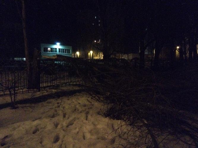 Рухнуло дерево в брянском детском саду на Новостройке