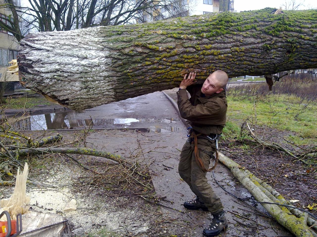 Брянский военнослужащий незаконно срубил три дуба