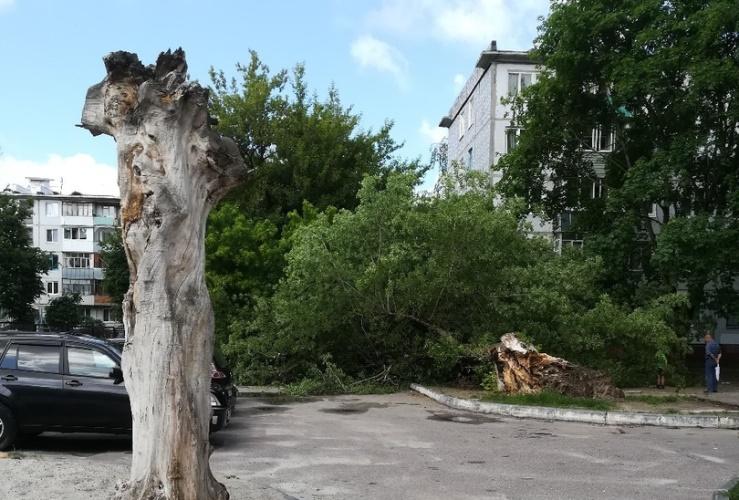 В Брянске на тротуар рухнуло огромное дерево
