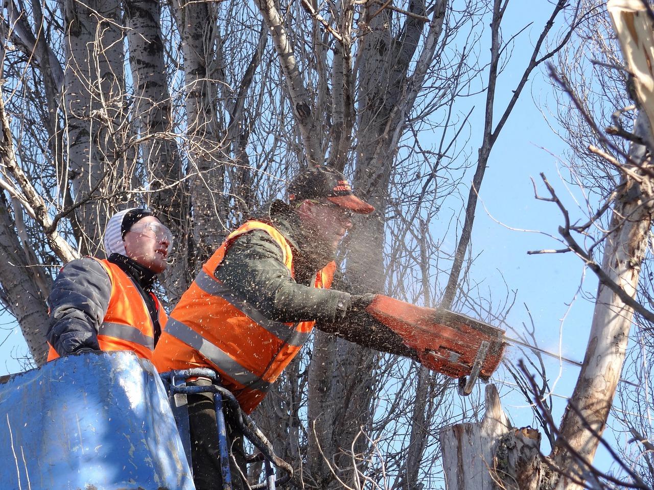 В Брянске на Объездной улице снесли ряд тополей