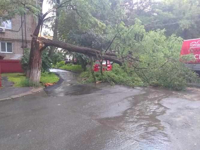 Брянцы просят убрать упавшее дерево