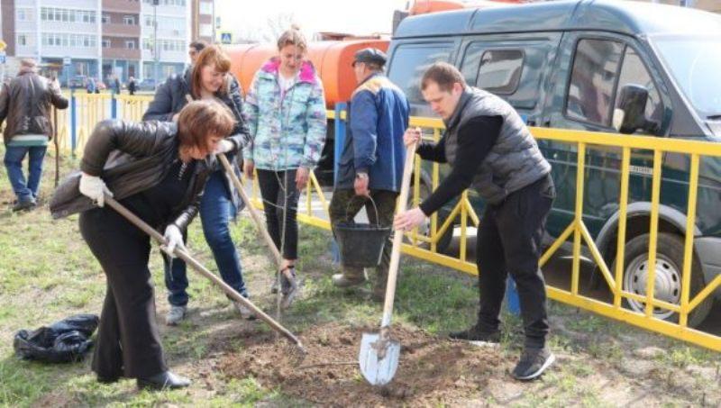 В Брянске на улице Романа Брянского посадили 40 рябин