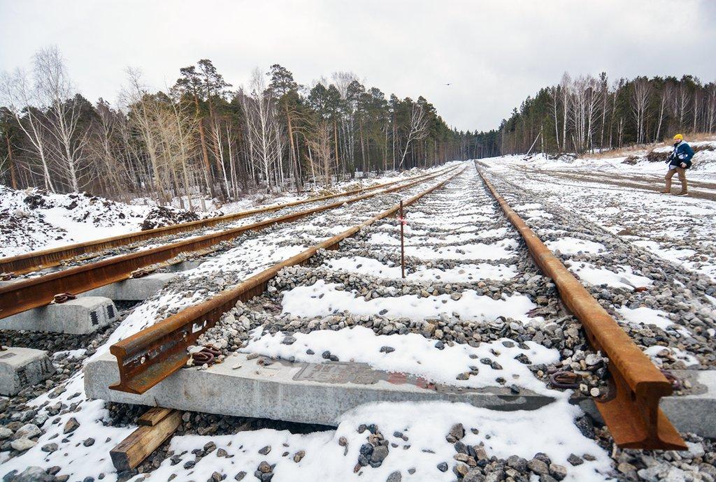 Начальник железной дороги в Брянской области уничтожил деревьев на 9 млн рублей