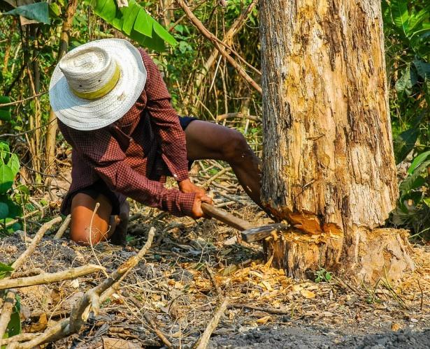 Брянец незаконно срубил деревья в лесничестве