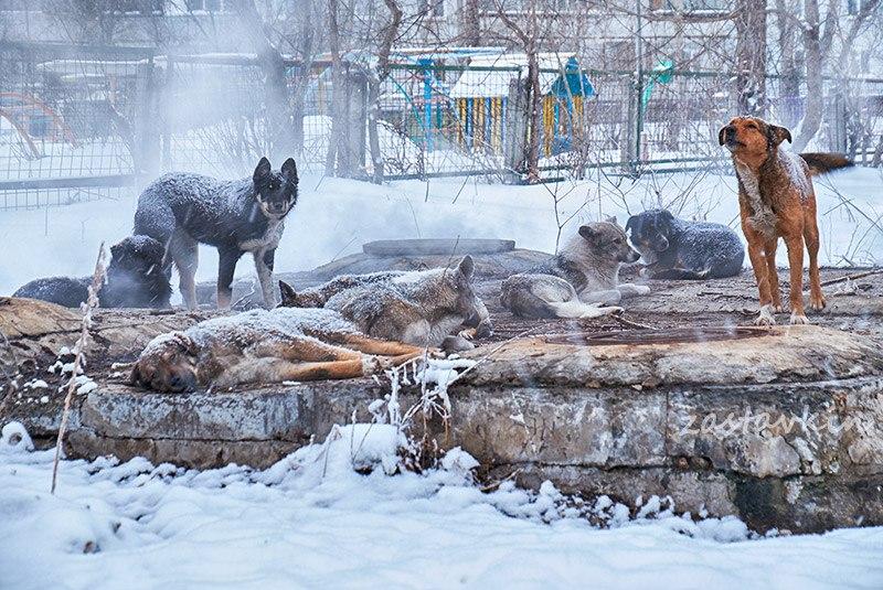 В Брянске собаки и люди без определенного места жительства устроили лежбище на трубах у детсада